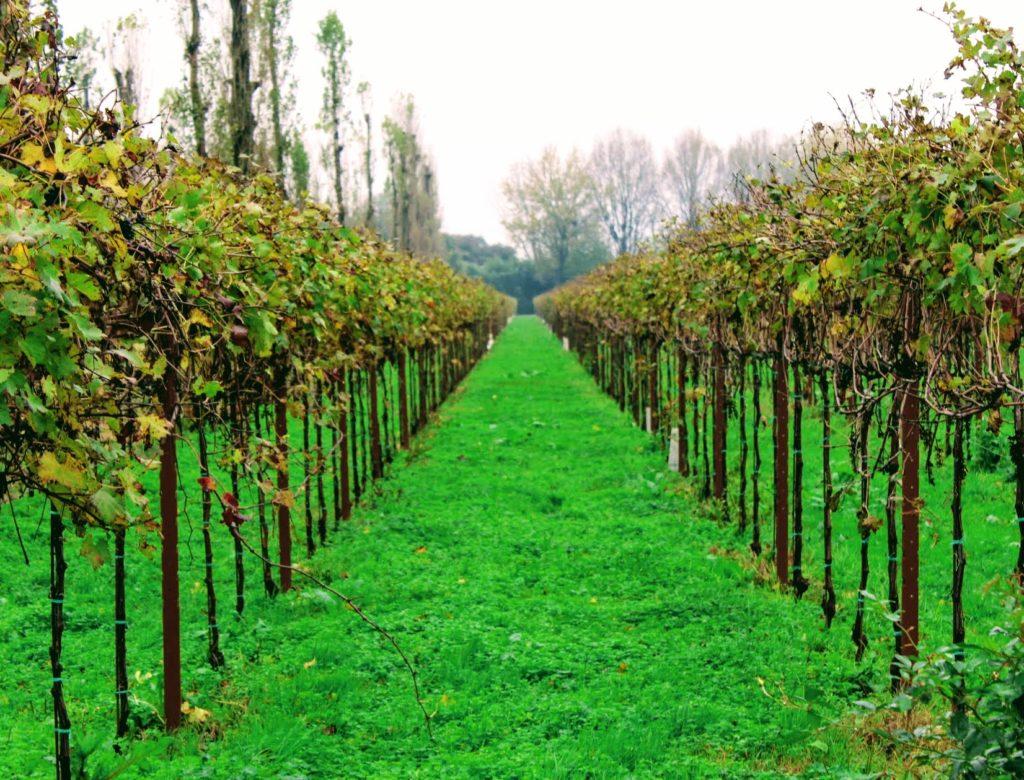 cantina de vinho bagnoli